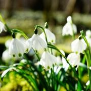 Évszakok színei - a tavasz