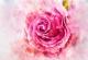 Morganit a rózsaszín csoda